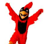 cardinal_mascot2